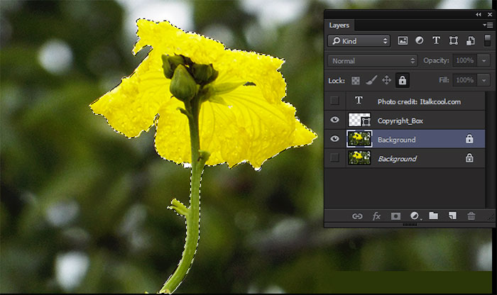 marquee layer photoshop